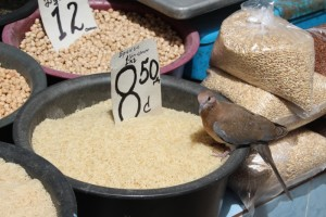 an unusual customer for the rice
