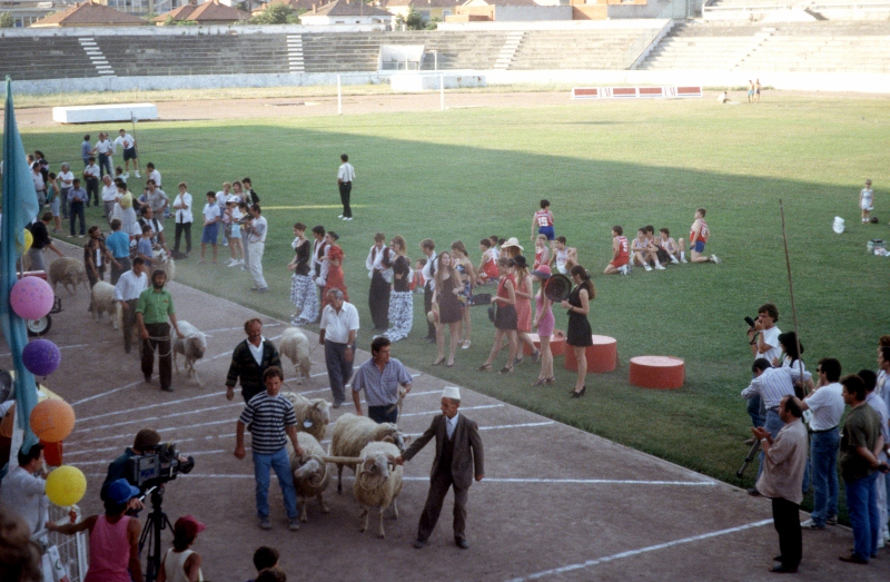 sheep constest in the Tirana stadium