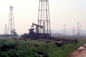the oil fields are shared with the sheep