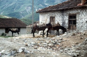 horses in front of a village house