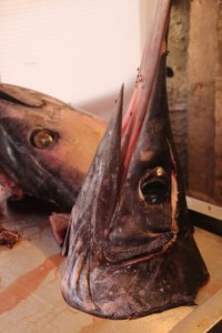 including fish head, the local swordfish