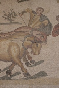 detail of the oxen