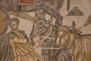 another oxen pair in detail