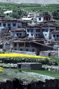 white-washed village houses and yellow flowers