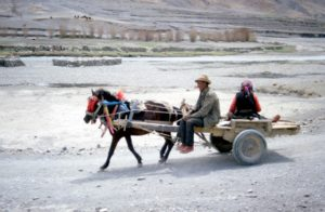 most popular way of transport