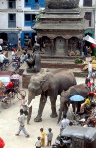 nothing strange here, elephants in the street
