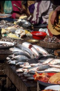 fish in the Yangon market