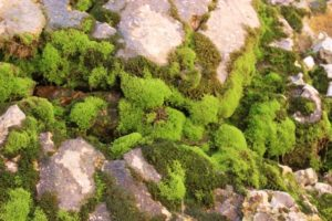 even here, there is some life, in the form of mosses that benefit from a small cascade