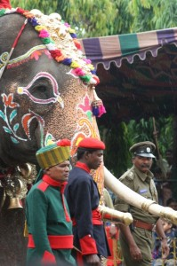 caparisoned elephant in the parade (3)