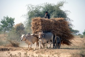 some economic activity also takes place in Bagan
