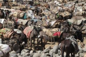donkey parking
