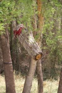 bee nest in detail