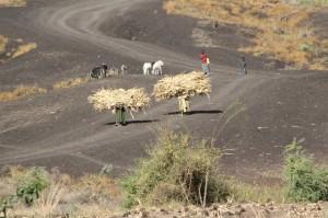 women doing the donkey work