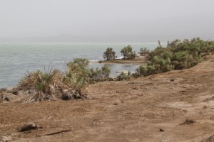Lake Afrera, supporting the only, however minimal, vegetation in the area