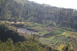 the slopes in between the temples are used for agriculture