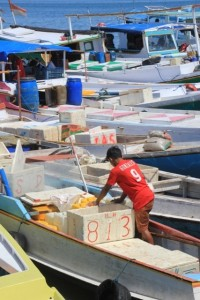 the boats deliver the fish straight to the market