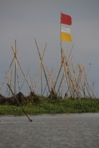 bamboo poles are placed to tie the waterplants