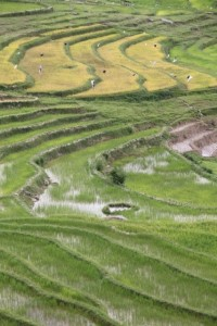 the view from Taupe, rice paddies