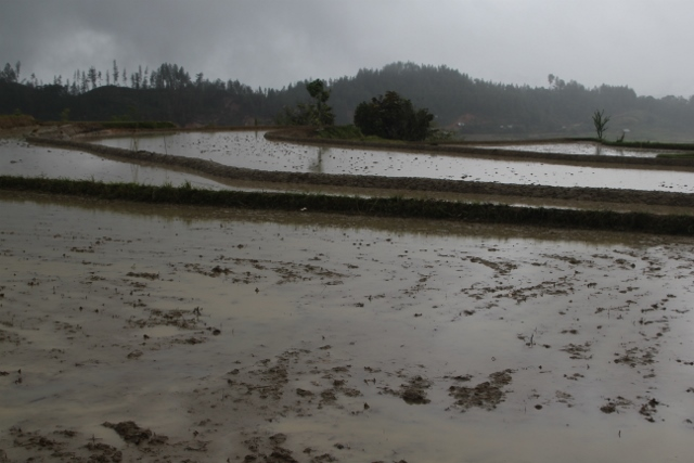 much of these dark clouds had emptied themselves already, but this water is actually for the rice paddies, with new plants