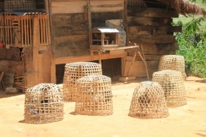 baskets to keep the cocks in, so they don't attack each other outside the fights