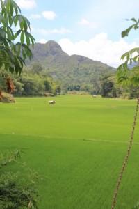 rice paddies near Marante