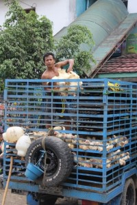 chicken seller in the Pasar Pagi