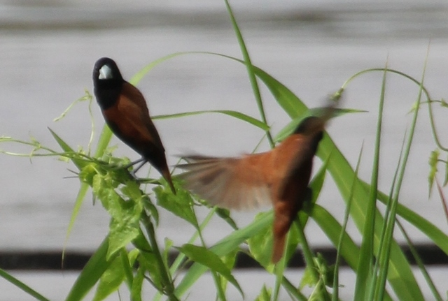 and some birds enjoying themselves along the river bank