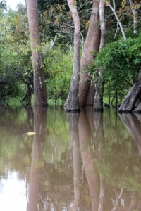 trees partly under water along the river