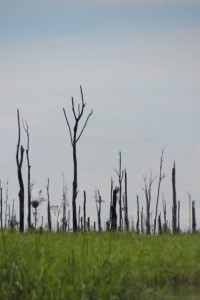 some part of the forest burnt down recently
