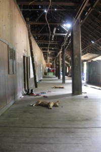 inside the longhouse, clearly being used