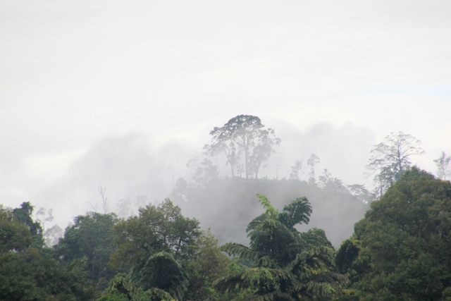 jungle in the early morning mist