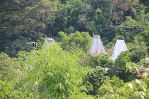 traditional houses, tin-roofed, sticking out of the tree cover