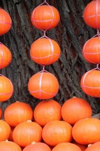 bright orange oranges in the vegetable market