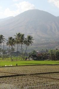 rice paddies in the shadow of – and occasionally under the smoke of – Gunung Guntur