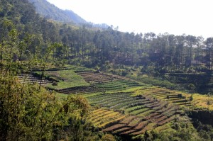the fertile slopes of Gunung Ungaran are also used for vegetable terraces