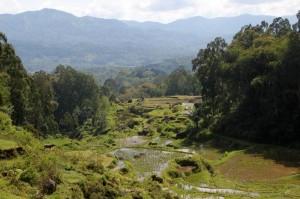 view along the road to Batutumonga