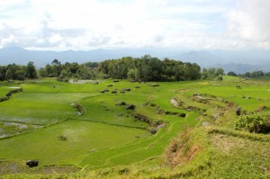 more rice paddies outside Batutumonga
