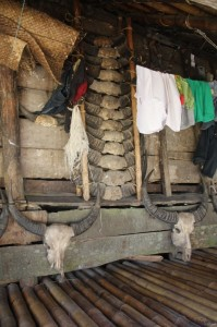 houses are decorated with the horns of slaughtered water buffalo