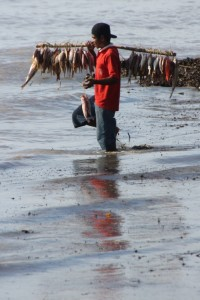 fisherman ready to clean his catch off the beach of Wanakoka