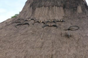 buffalo horns drying on the roof, after a party