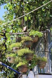 flower pots with a twist