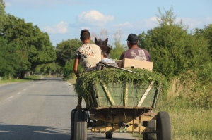 the usual transport in Bulgaria