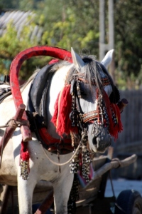 beautifully decorated horse, in front of a simple cart