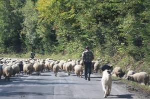 multiple road users, slowing down progress