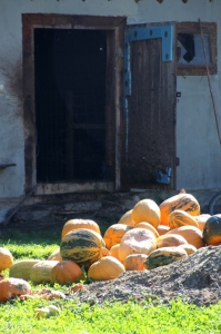 squash in front of the barn