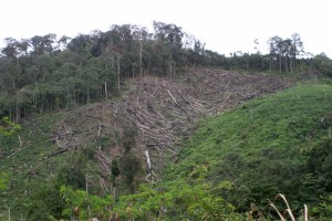 deforestation in the sparsely populated areas