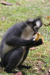 and another banana lover