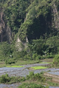 the rice paddy and mountain setting near Jangga