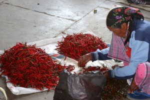 woman sorting chillie peppers