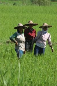 three women in the fields
